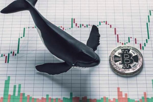 Baleia movimenta R$ 4 bilhões em bitcoin pagando R$ 16 de taxa